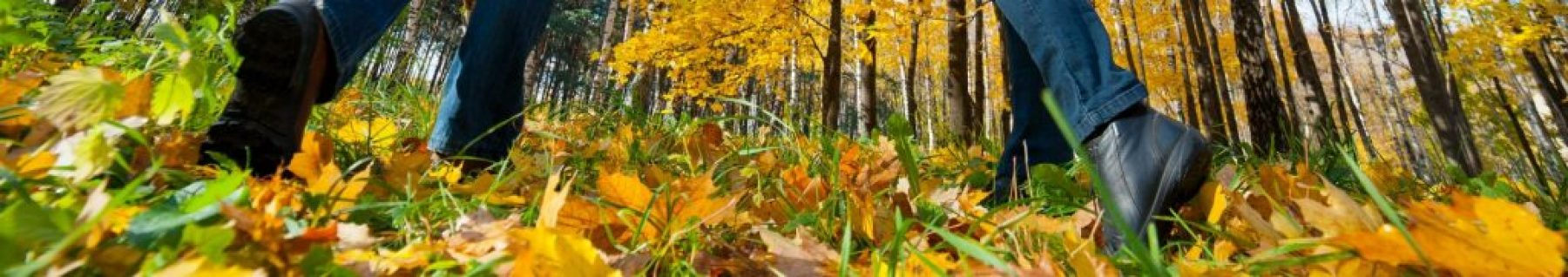 herfst-min